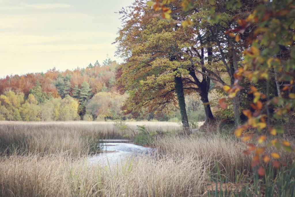 Autumnal woodland lake scene
